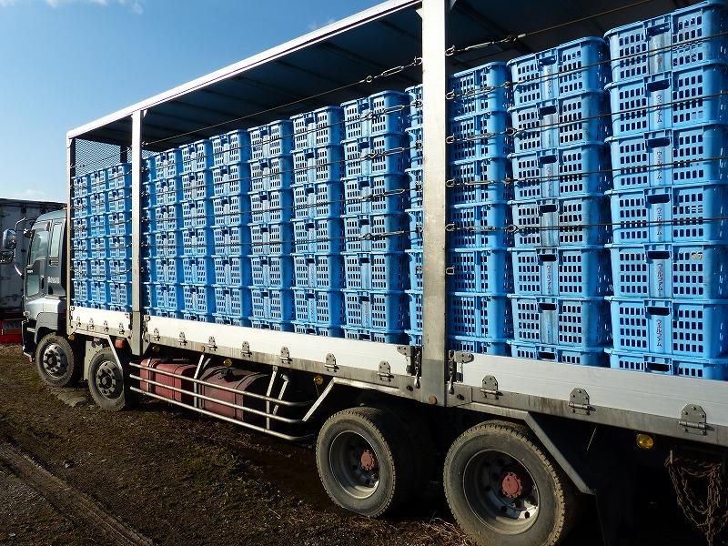 鶏 輸送 大型トラック